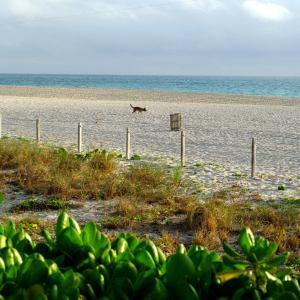 Mare di Miami