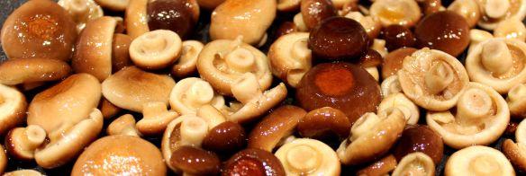 Crema di zucca - funghi